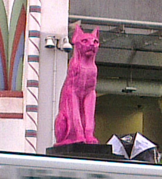 Pink_cat